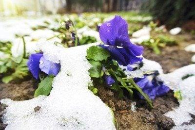 Winterizing urban gardens: caring for urban gardens in winter