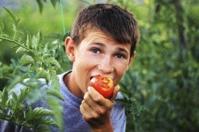 bitter tomato