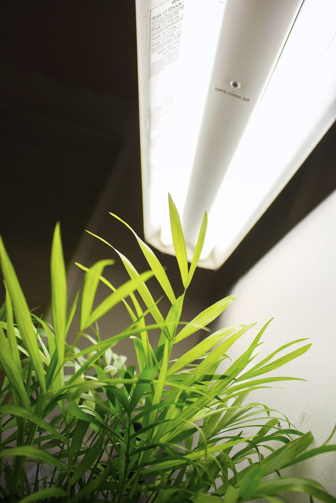 Fluorescent Grow Lights Learn About Different Types Of