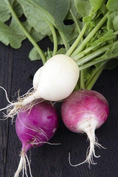 radish variety