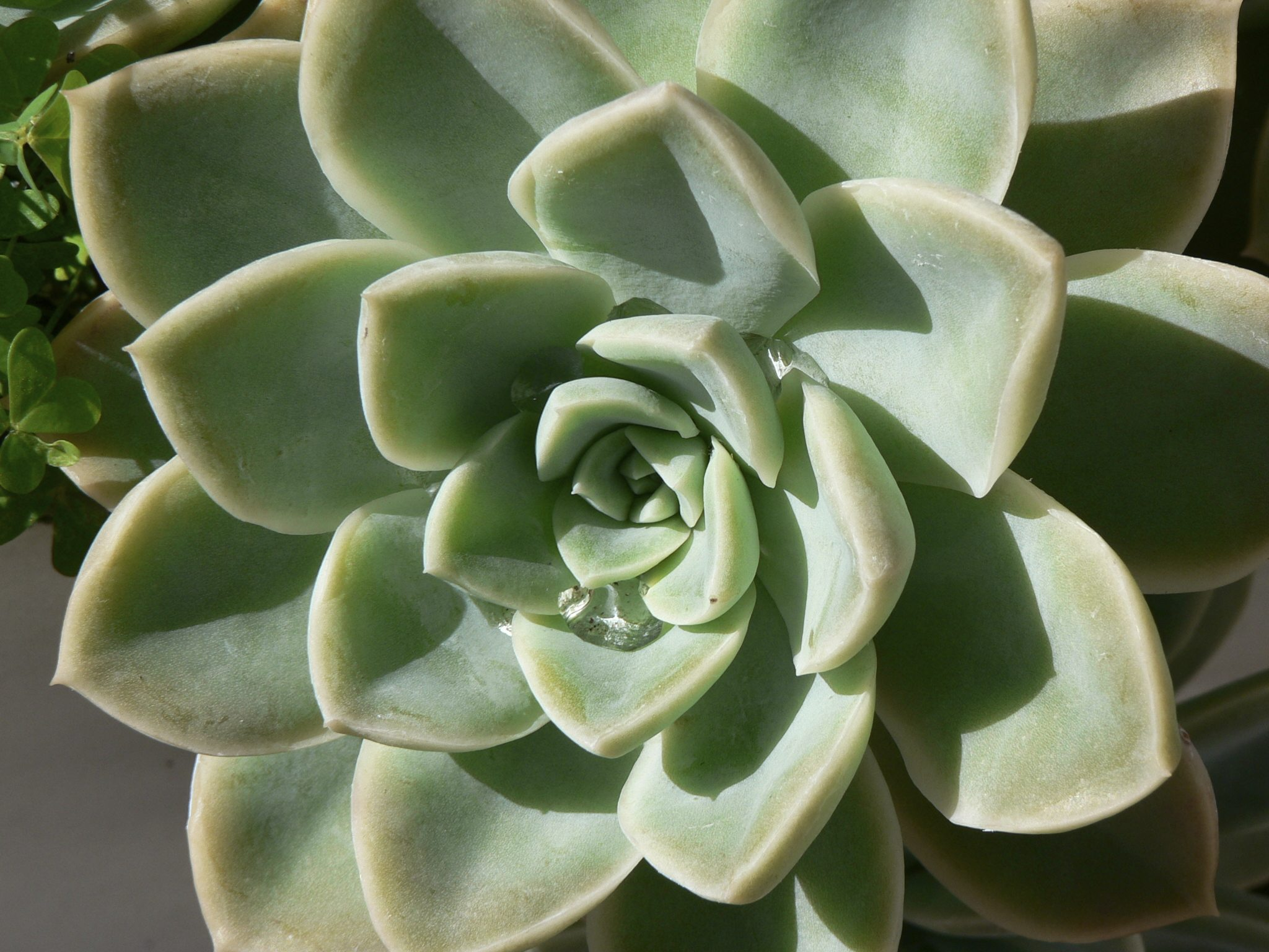 what is a succulent plant succulent vs cactus and other succulent