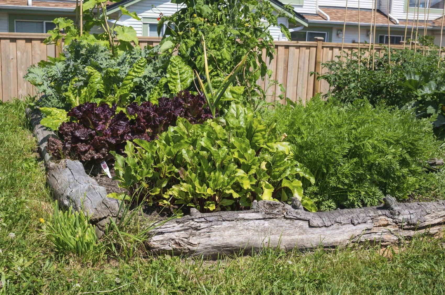 Urban Garden Problems: Common Issues Affecting Urban Gardens
