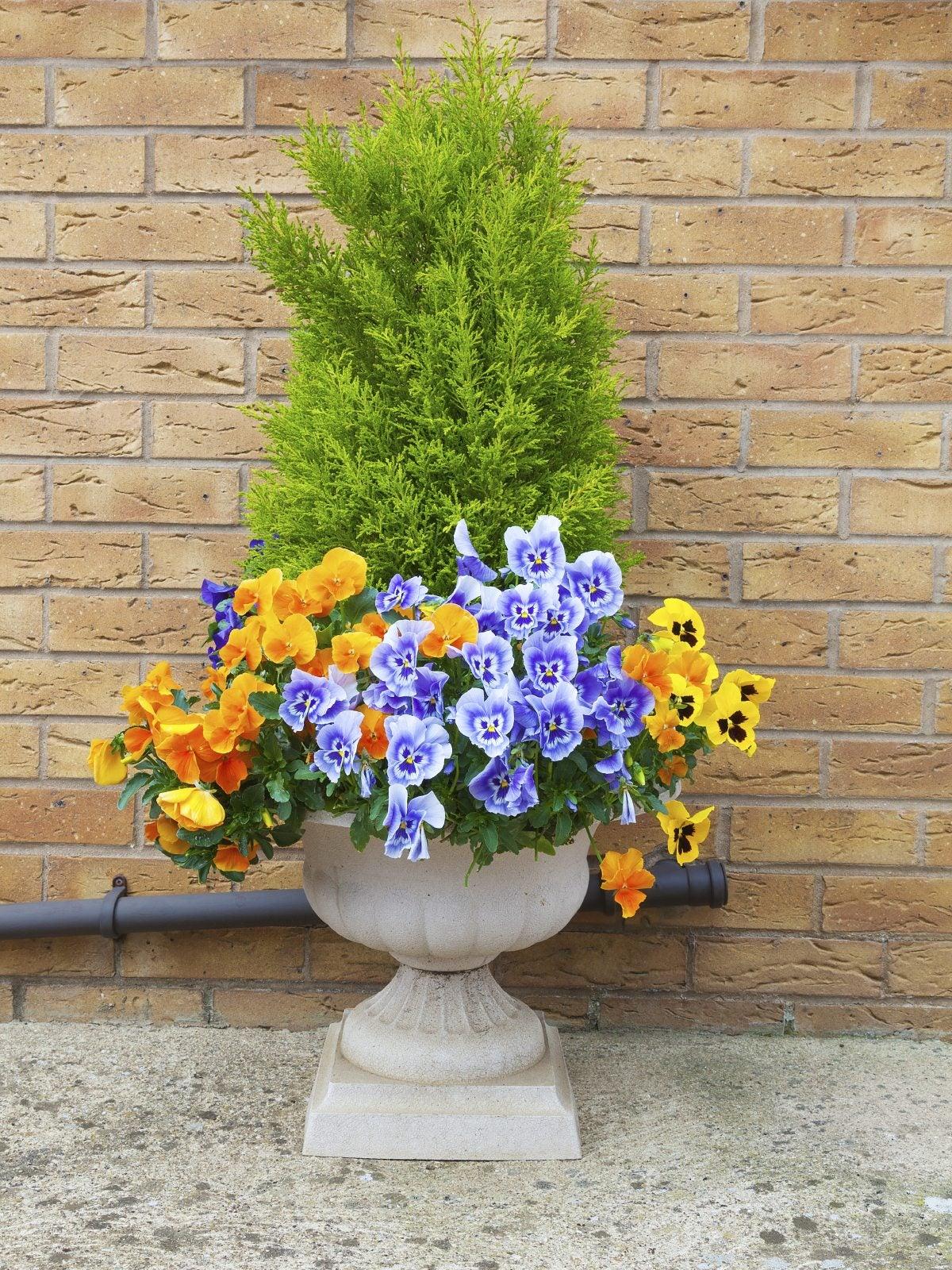 winter container garden ideas: tips for container