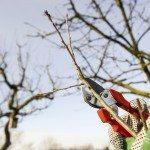 winter fruit trees