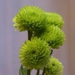 green blooms