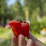 tomato nose