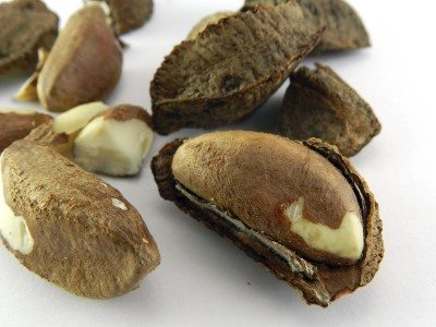 Brazilian nut called castanha do para