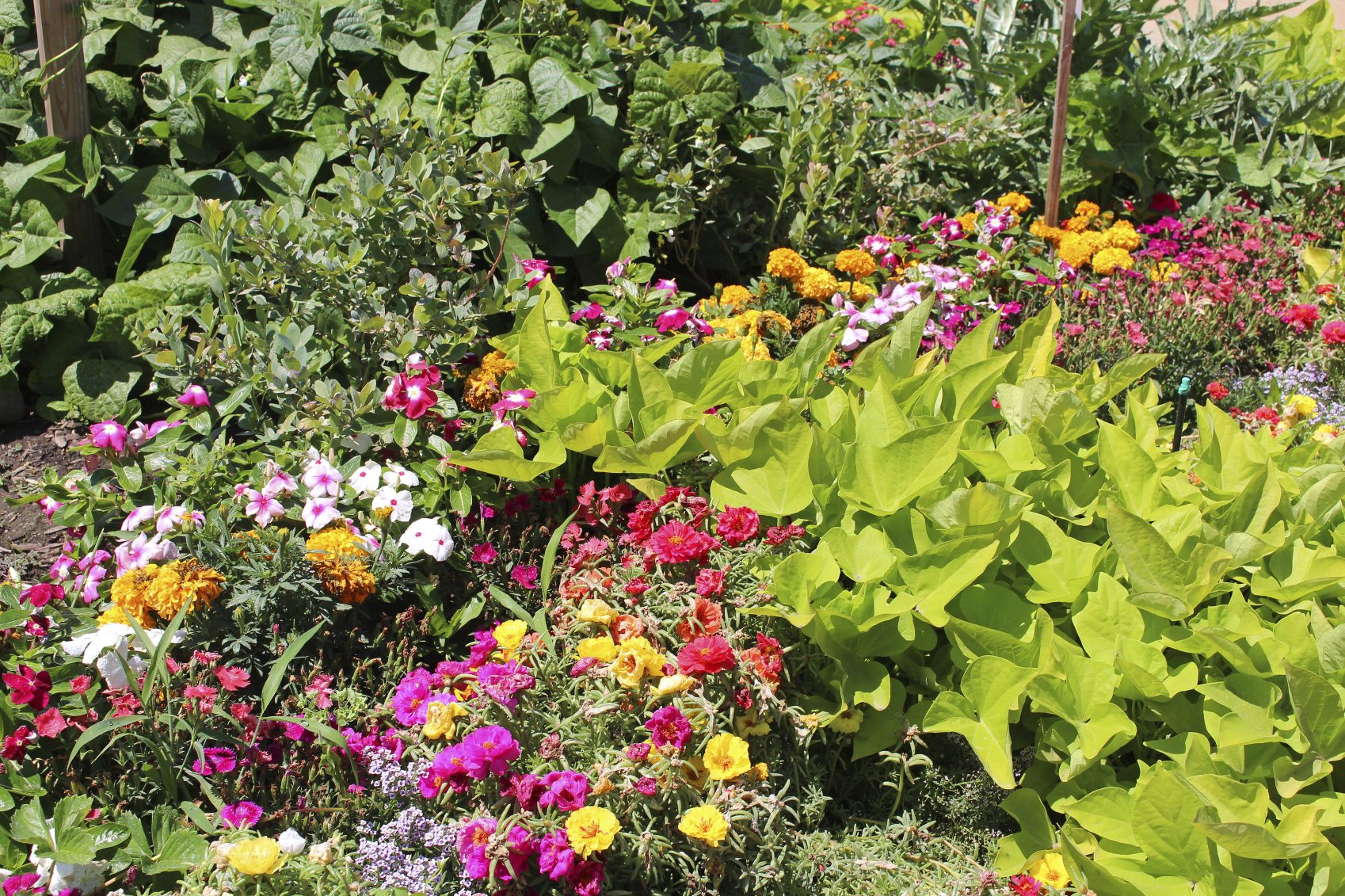 Vegetables in front lawns tips for planning a front yard for Vegetable and flower garden ideas