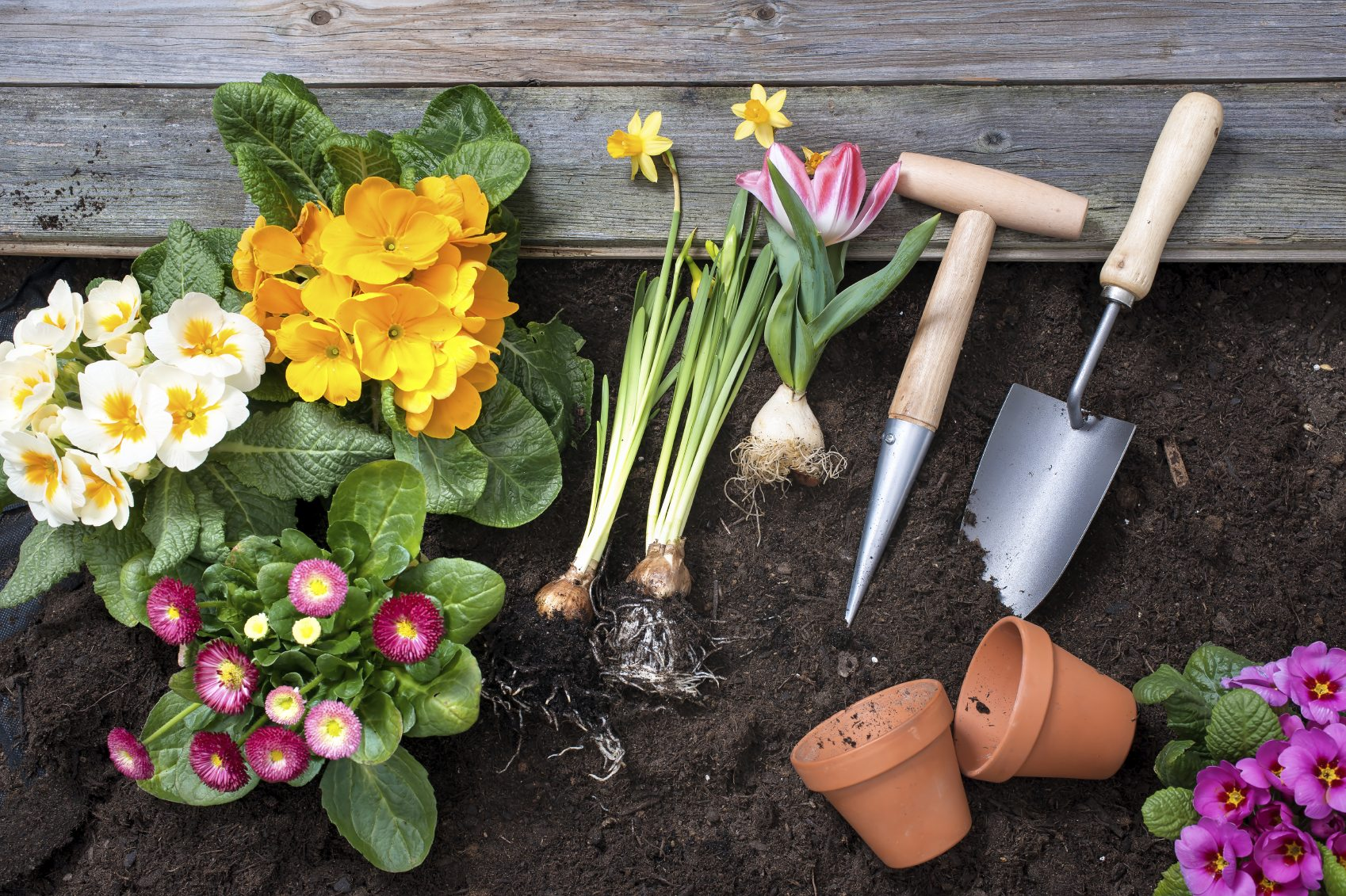Planting A Flower Garden For Beginners Flower Gardening