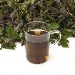 Nettle tea in a mug with nettle leaves on background