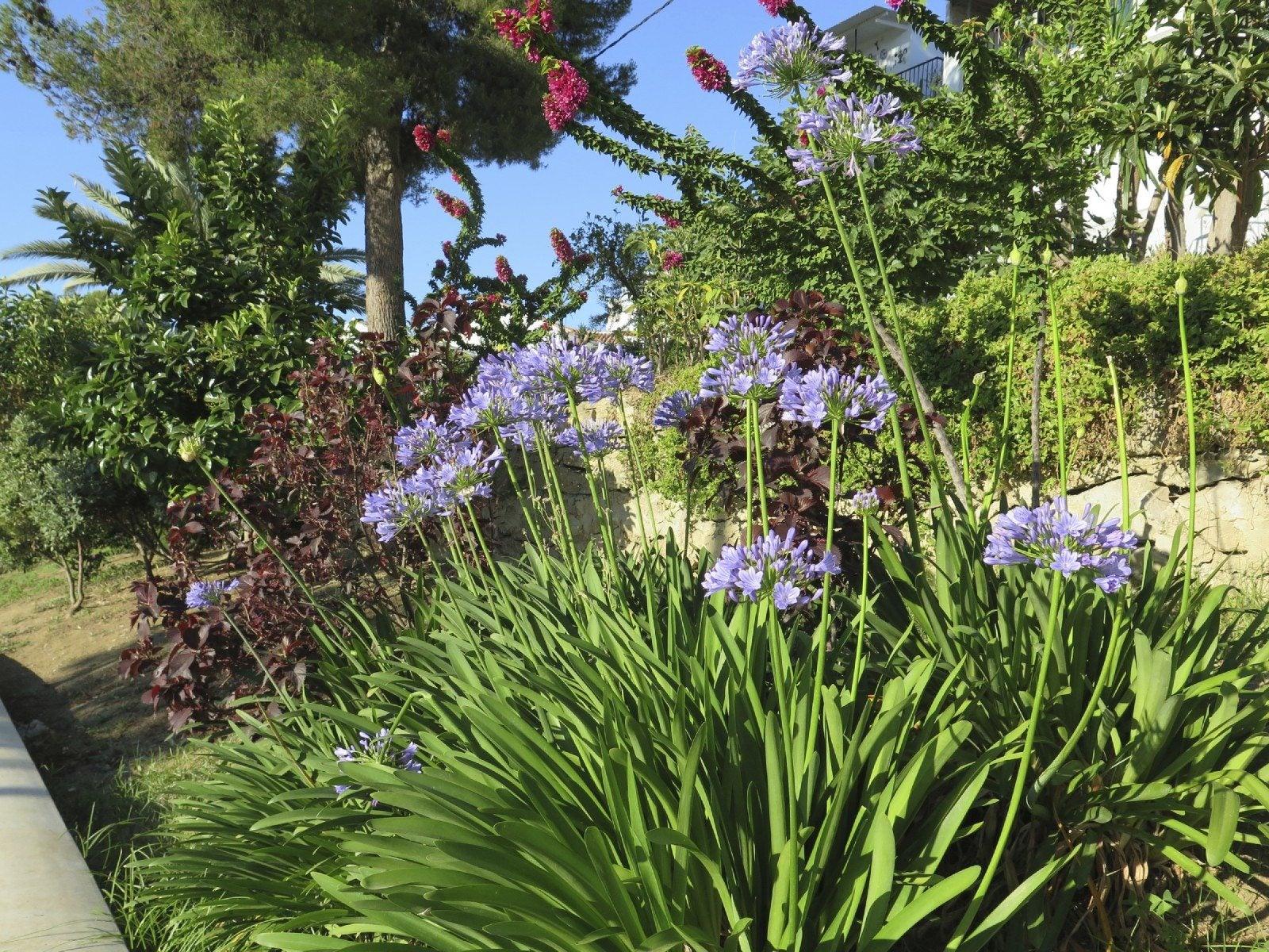 Find Your Gardening Zone  Bonnie Plants