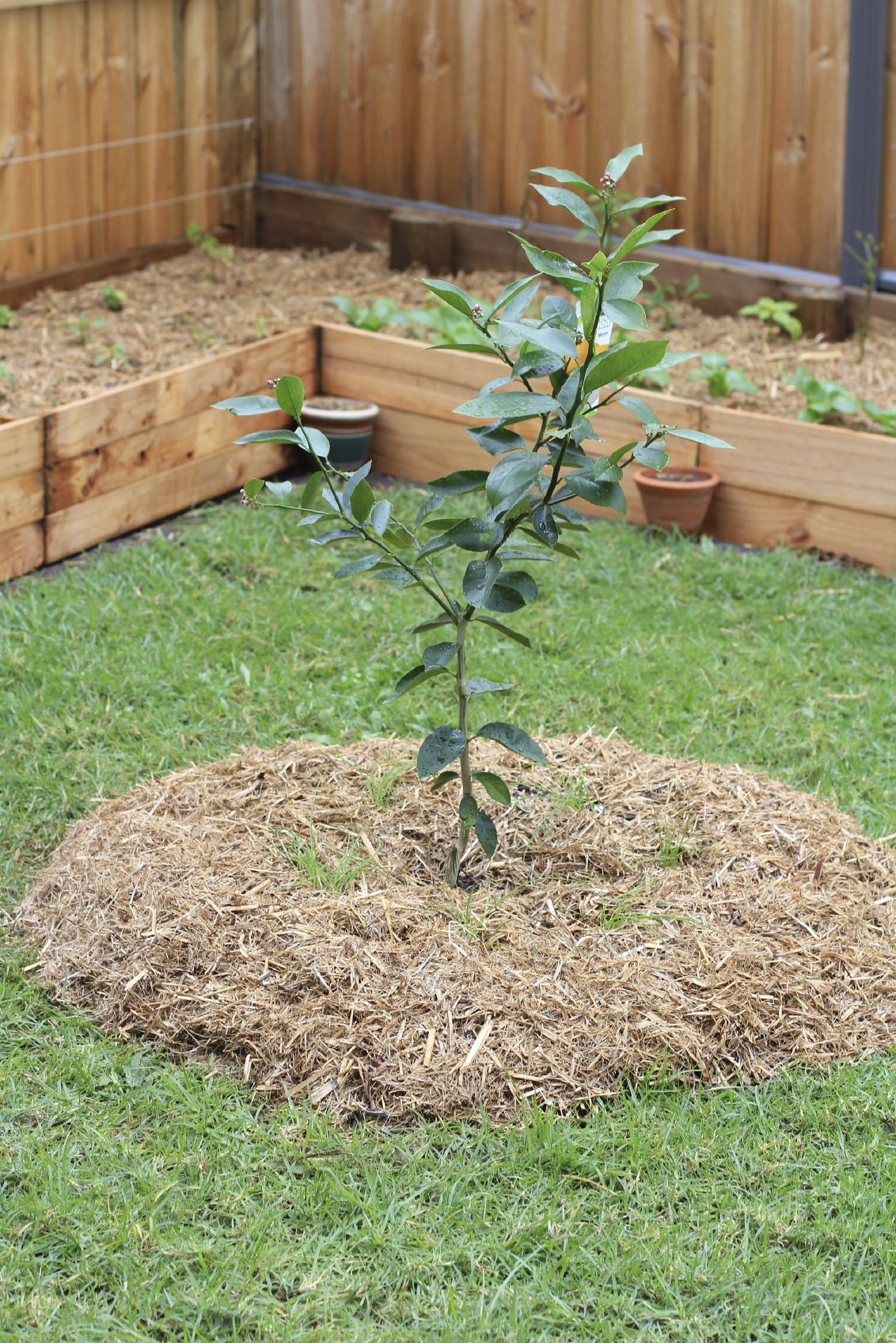 Fruit Trees In Garden Design - Ideas For Planting Fruit ...