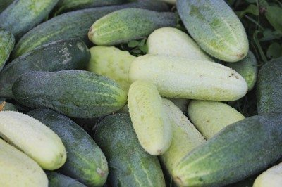 Cucumbers can be not only green, but white as well.
