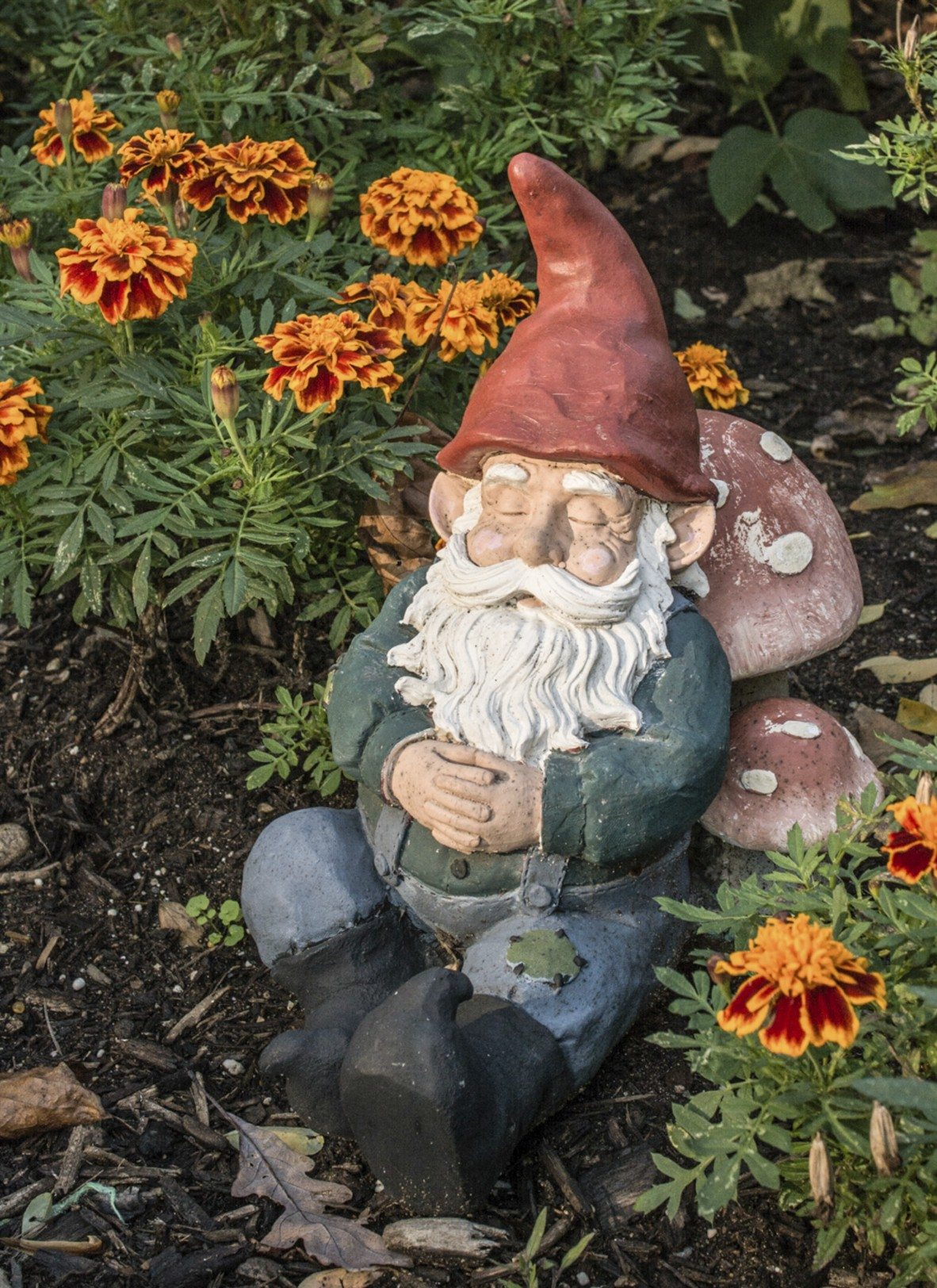 Gnome In Garden: Learn About The History Of