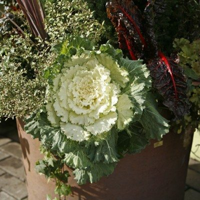 Clay Pot of Decorative and Ornamental Vegetables