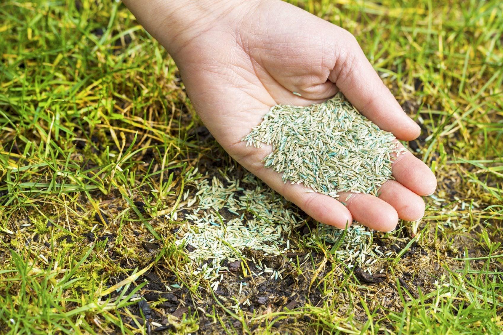 landscape lawn seed