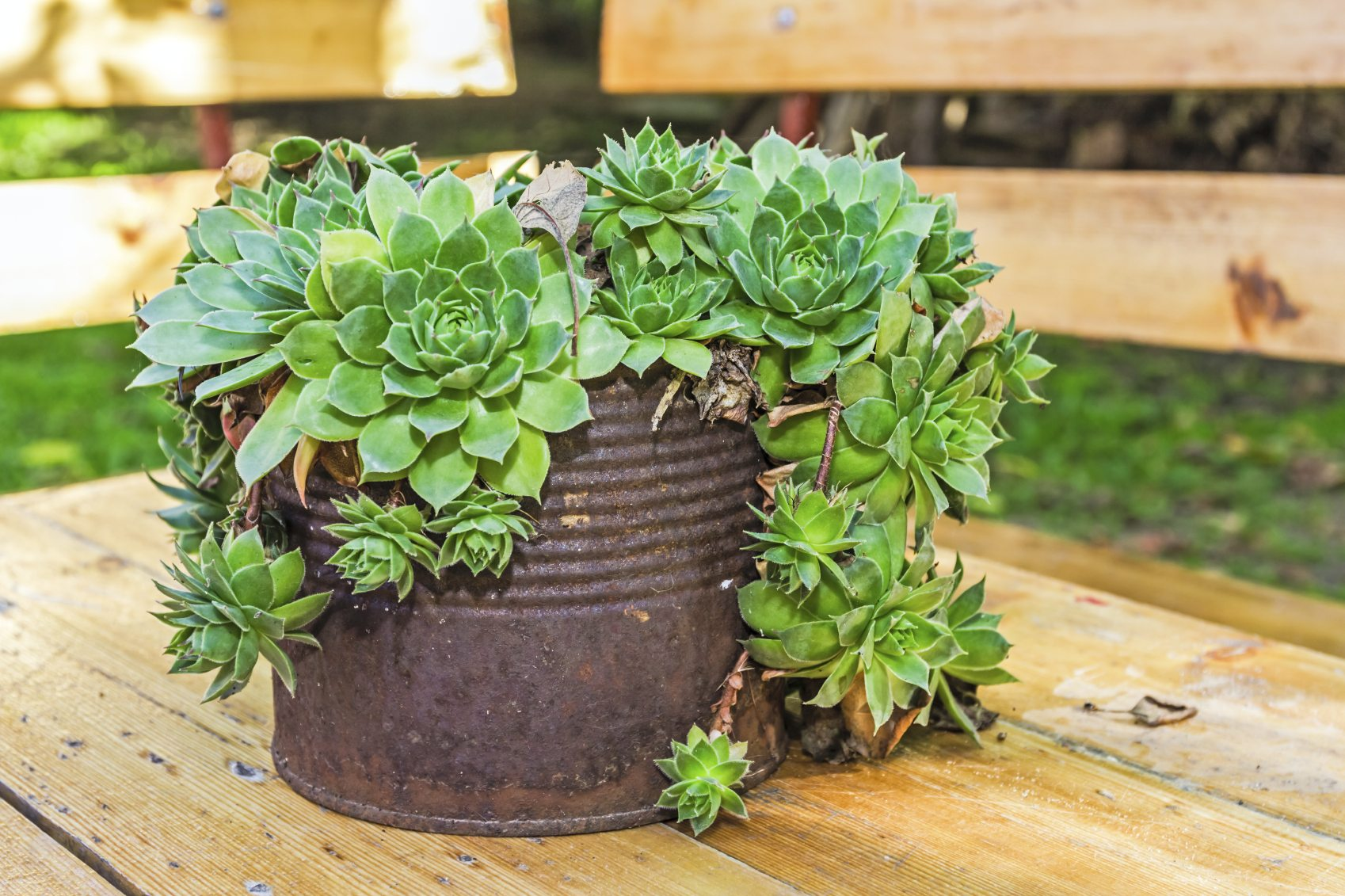Creative Containers For Succulents Using Interesting