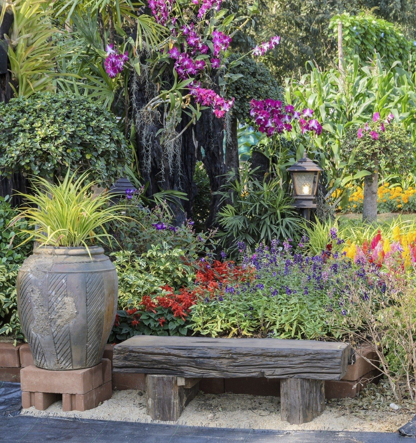 Choosing colorful garden plants tips for adding color in for Choosing plants for landscaping