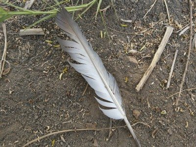 Can you compost bird feathers: how to compost feathers safely