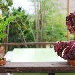 indoor-vegetables