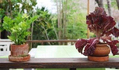 Vegetable Gardening Indoors Starting A Garden