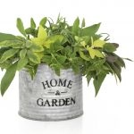 Herb leaf selection of rosemary, sage varieties and oregano in an old aluminum pot with the words home and garden, isolated over white background.