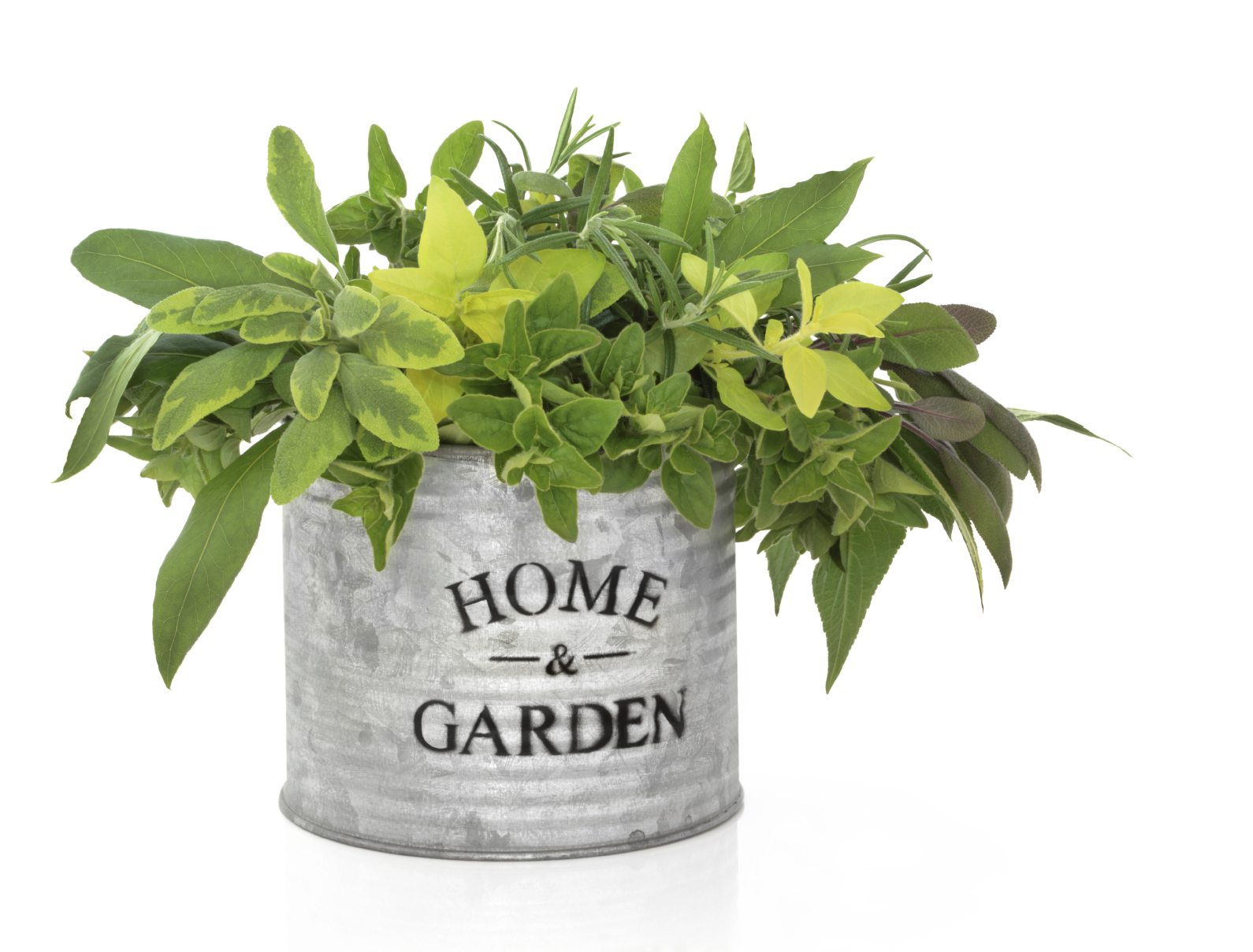 Planting In Galvanized Steel Containers Using Galvanized Containers For Gardening