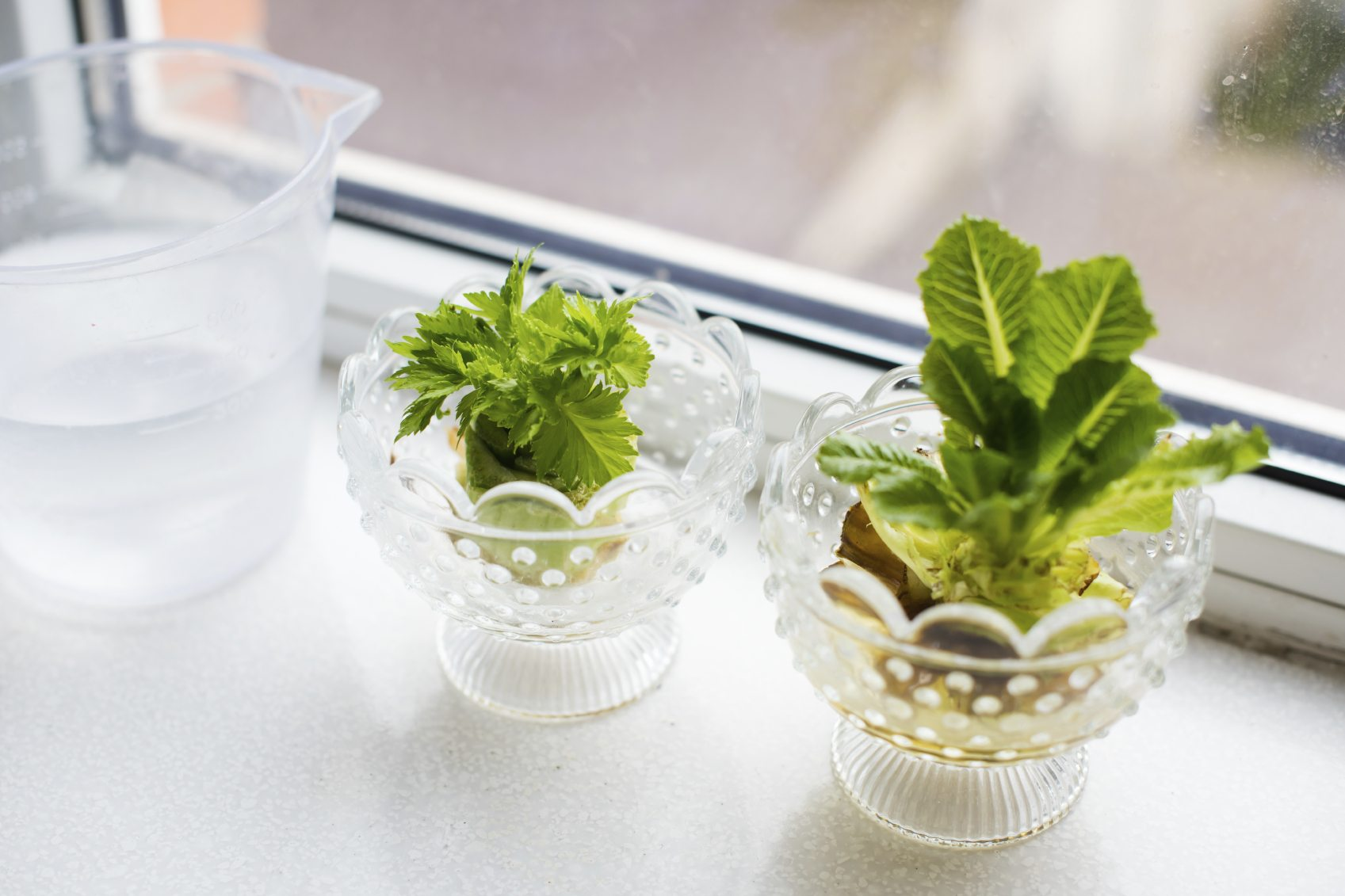 Windowsill Plants From Kitchen Scraps - How To Regrow ... Growing Vegetables From Scraps