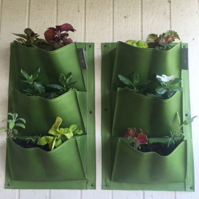 Planting shoe organizer gardens: tips on vertical gardening in a shoe organizer