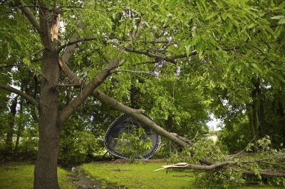 Wind injury to plants – how to fix wind damaged plants