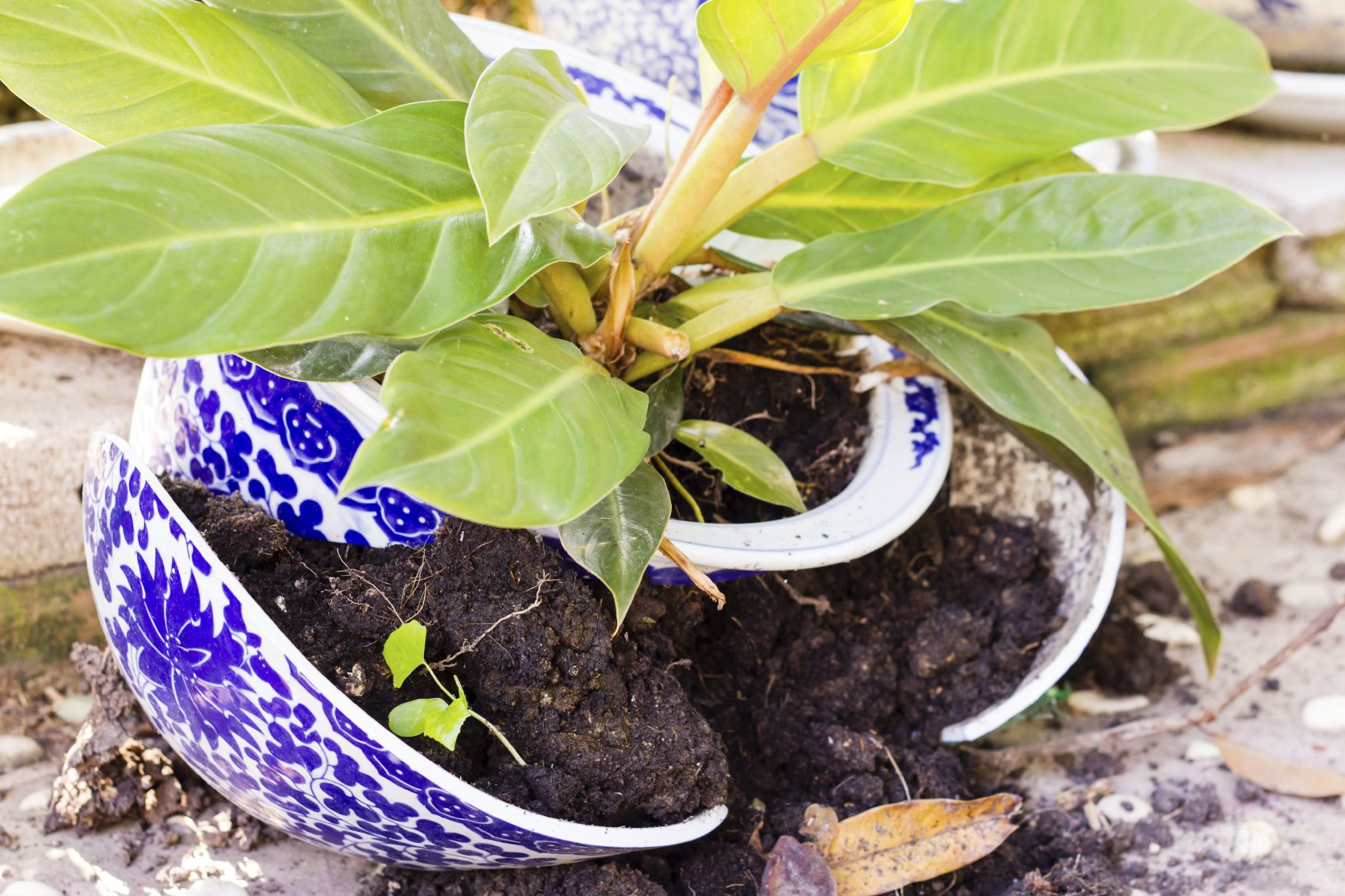 Broken Pot Garden Ideas: How To Make A Garden From Broken Pots