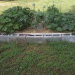 cinder-block-garden