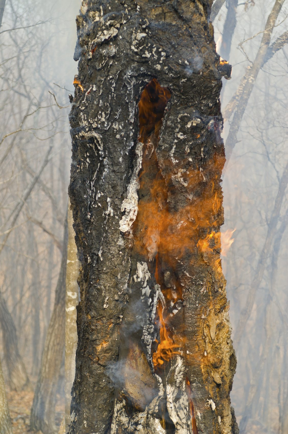Helping Fire Damaged Trees - How To Save Trees Damaged By Fire
