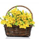 freesia in basket