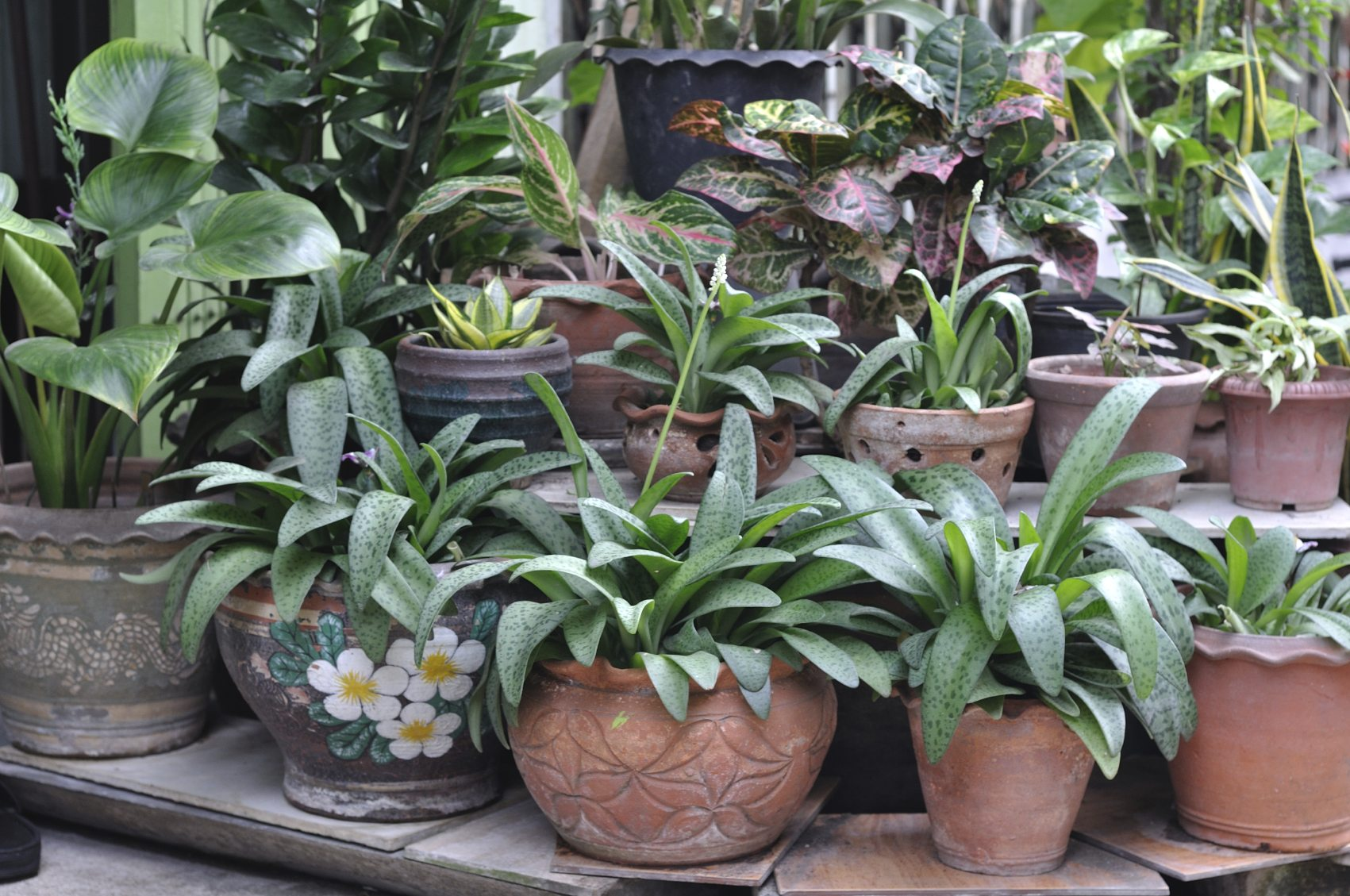 When To Bring In Potted Plants – Tips On Bringing ...