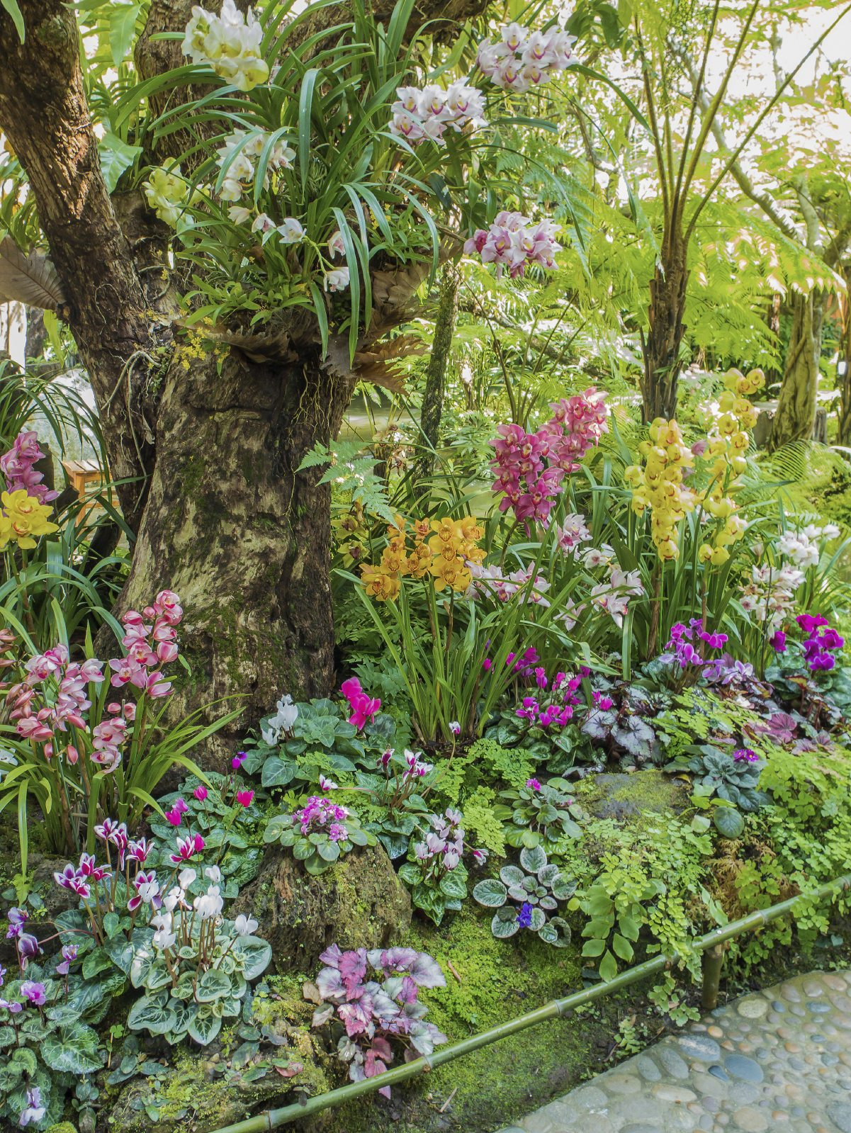 Ten Top Tips For Small Shady Urban Gardens: Suggested Plants For Hot Climates: Tips On Gardening In