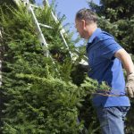 """""""pruning the Yew tree in the front yard, motion blur - for more gardening"""""""