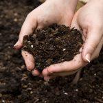 Hands Holding Organic Dirt From Garden