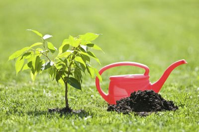 Image result for gardening water
