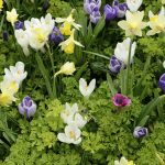 Spring flowers on flower bed