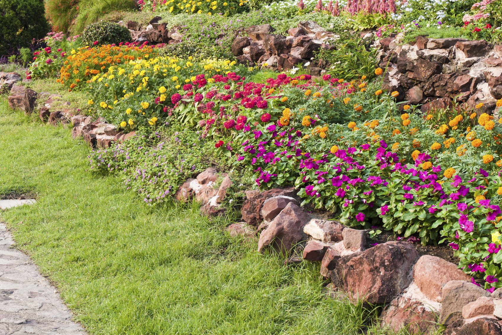 Dense Planting For Weed Control