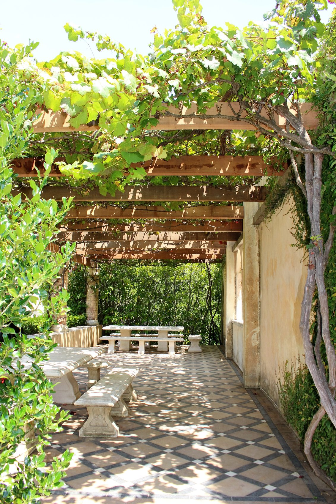Using Vines For Shade Vines That Create Shade In The Garden