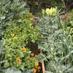 Diversity in the vegetable garden