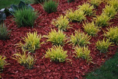 Is Colored Mulch Toxic Safety Of Dyed In The Garden