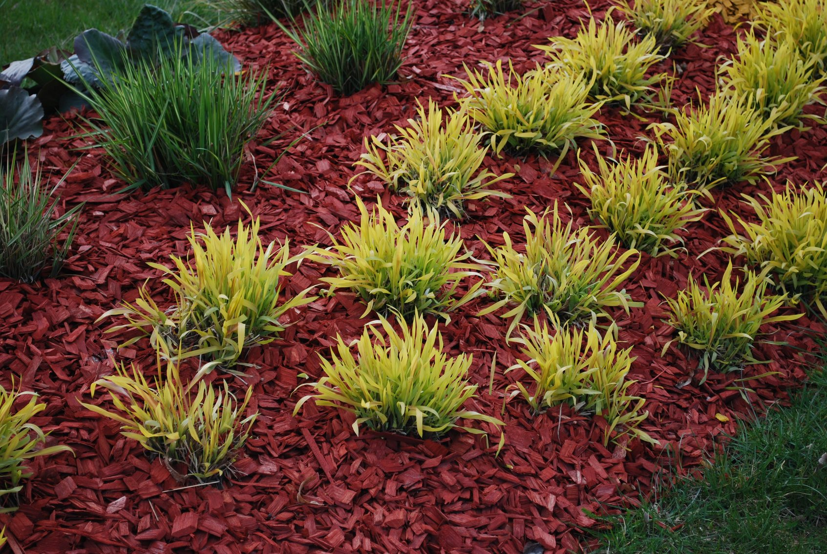 Dyed Mulch Vs. Regular Mulch: Using Colored Mulch In Gardens