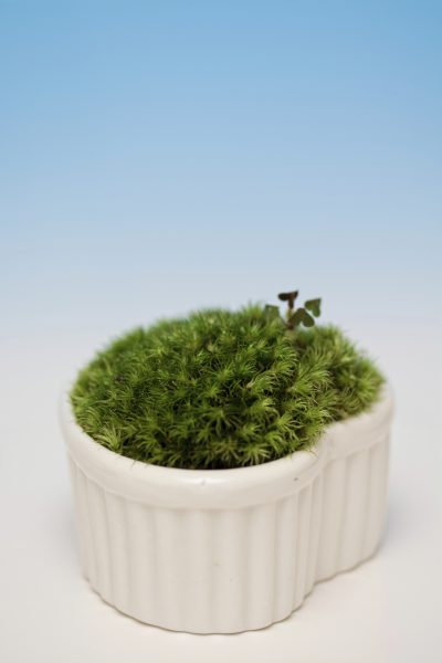 moss in plant pots  tips on growing moss in containers