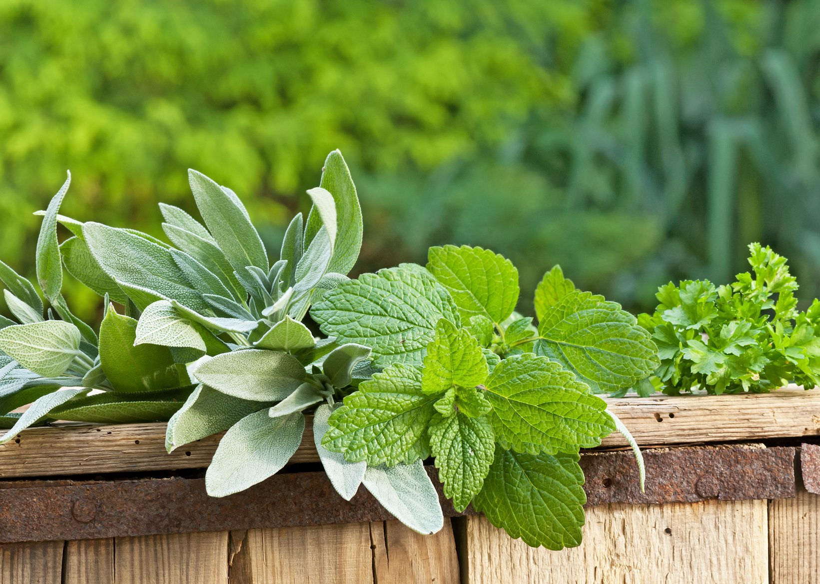 Companion Plants For Lemon Balm: What Are The Best Lemon Balm ...