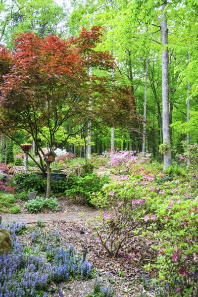 Superbe Zone 7 Plants: Learn About Planting A Garden In Zone 7