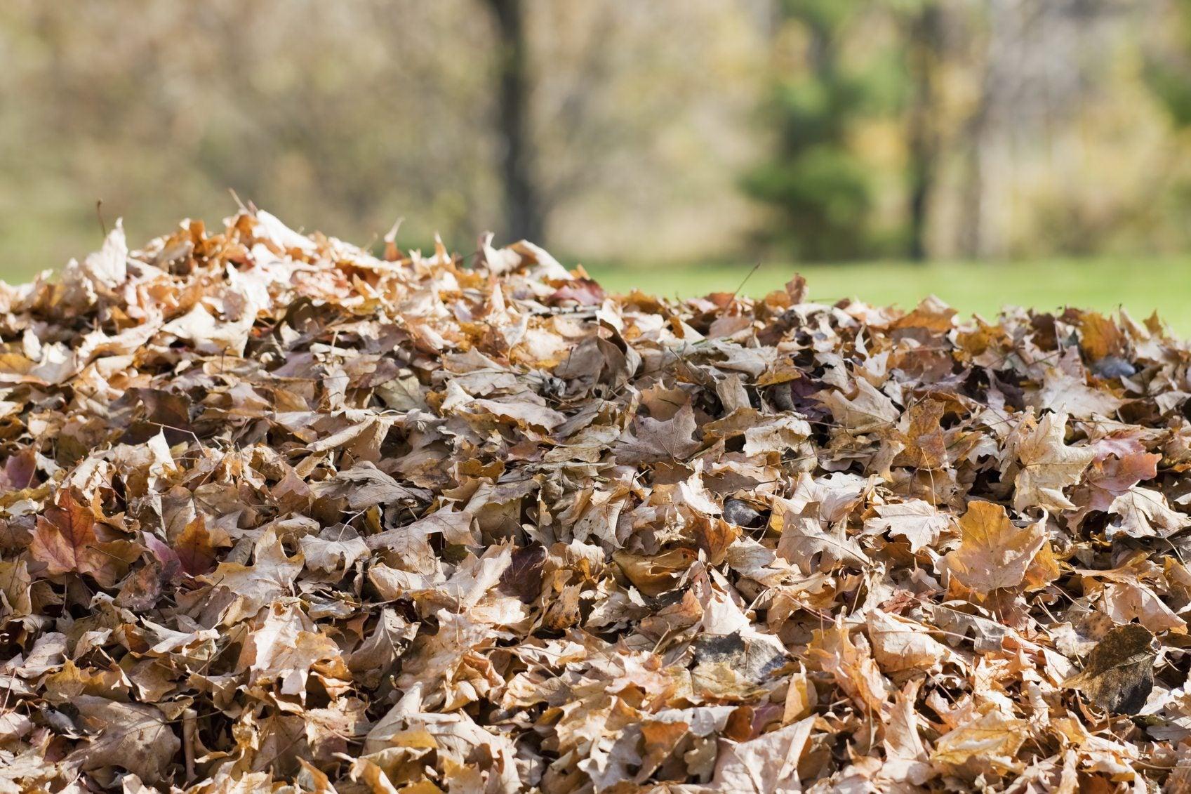 potato leaf pile