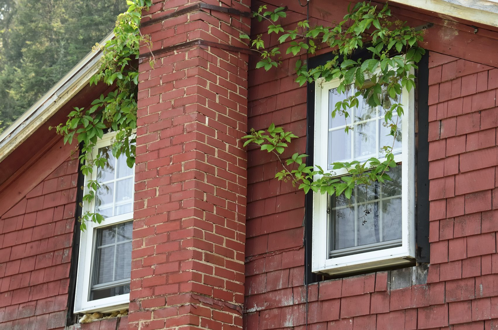 Damage From Growing Vines On Siding How To Keep Vines